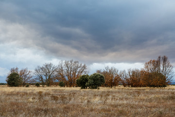 Pradera, robles melojos y encinas en otoño con cielo tormentoso. Quercus pyrenaica. Quercus ilex.