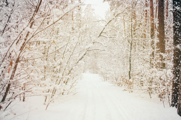 toned picture of beautiful snowy winter forest