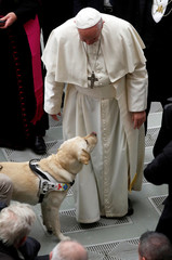 Pope Francis greets a blind man's guide dog during the weekly general audience at Paul VI hall at the Vatican