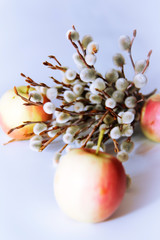 yellow red apples and willow branches with flowers for the holiday of holy Easter