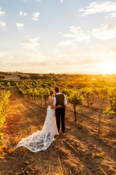 Sunny Sunset in the Vineyards with Newly Wed