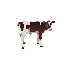 Calf cow vector