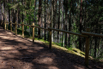 tourist walking footpath in green forest