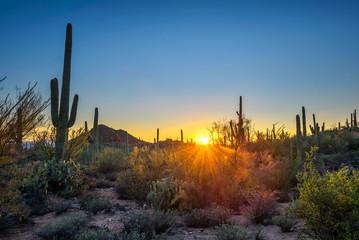 Sunset in Saguaro National Park in Arizona