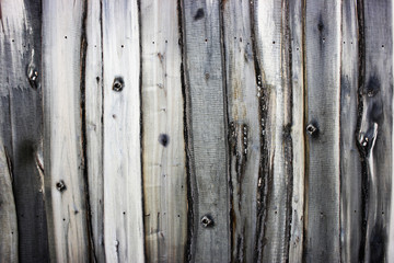 Textured background from an old wooden fence. Solid wood texture