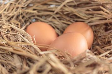 eggs organic fresh on straw hay in henhouse.
