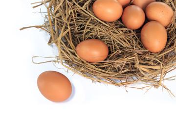 eggs organic fresh in straw hay on white background.
