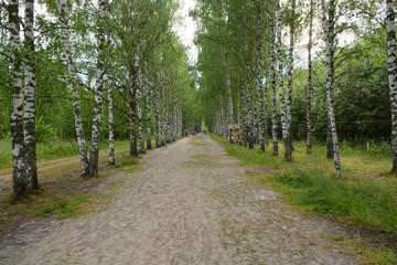 Deurstickers The walking path to Svetloyar Lake in Nizhny Novgorod region