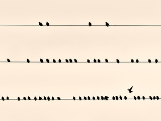Black birds on a wire