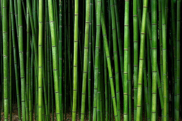 Printed kitchen splashbacks Bamboo bamboo forest pattern