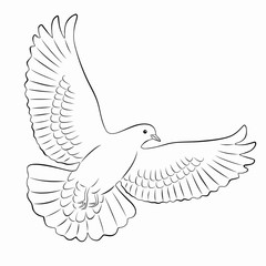 dove illustration, vector draw