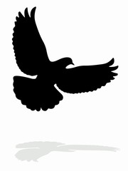 dove silhouette, vector draw