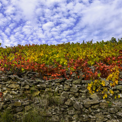 Terraced vineyards with dry stone walls