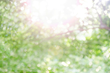 blurred bokeh tree forest bright under light shine flare of sun for nature background wild, bokeh tree green nature abstract and sun light shine, rainforest tropical evergreen forest blur bokeh