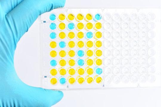 Enzyme-linked immunosorbent assay or ELISA plate