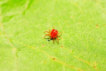 red mite on plant