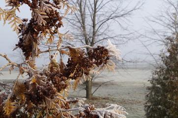 Fototapeta zima, śnieg, krajobraz, drzewo, mróz, gałązka  obraz