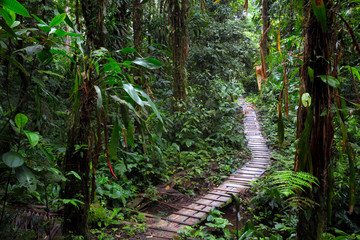 rain forest trail in the Amazon rainforest of Colombia. A wooden path through the tropical jungle.