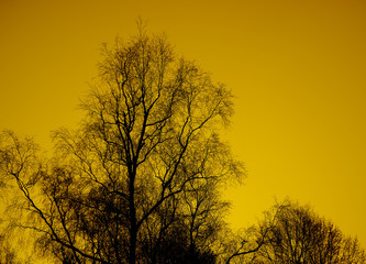 a Tree on yellow sky