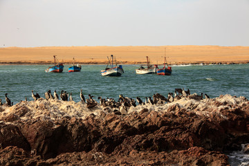 Landscape in Peru, wildlife in Latin america. Paracas reserve between desert and ocean