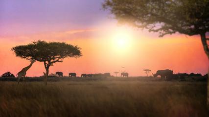 Dreamy African Sunset Safari Silhouette Scene