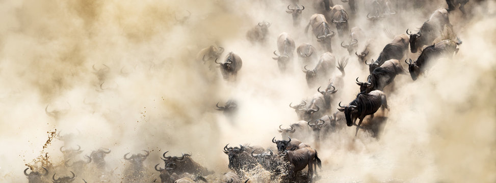 Dusty Wildebeest River Crossing Web Banner