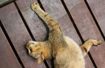 Cat on plank wood