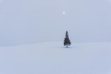 Christmas tree in Biei, Hokkaido, Japan