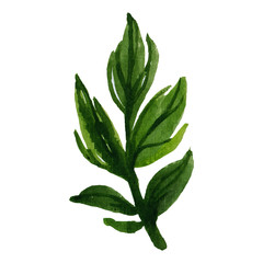 watercolor floral spinach leaf illustration