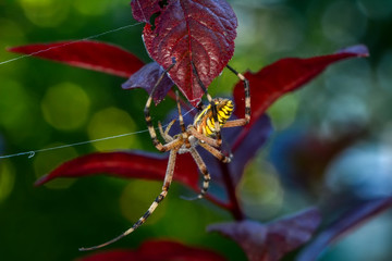 Spider on a spider web- Stock Image