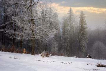 forest in hoarfrost. beautiful winter scenery. foggy sunrise