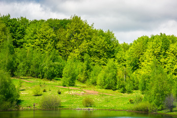 forested shore of the lake in springtime. lovely nature scenery