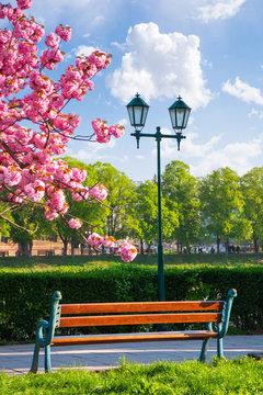 bench on the embankment near the lantern and sakura tree in blossom. wonderful springtime scenery of Uzhgorod town