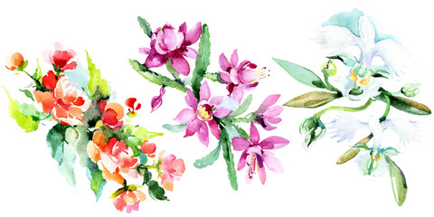 Bouquet watercolor background illustration set. Watercolour drawing isolated. Floral botanical flower. Isolated.