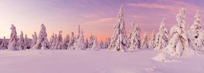 Wall Mural - Panoramic idyllic winter landscape