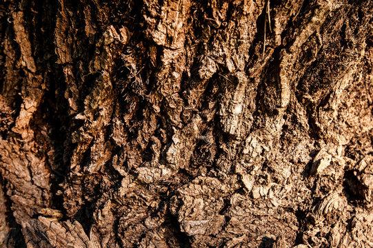Bark texture.