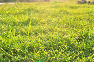 Spring or summer nature background. Grass with dew on a sunny morning. Defocus bokeh effect.