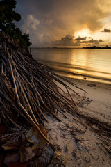 Stunning tropical sunset and palm tree roots