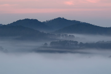 Pine forest valley in mistty morning - Image