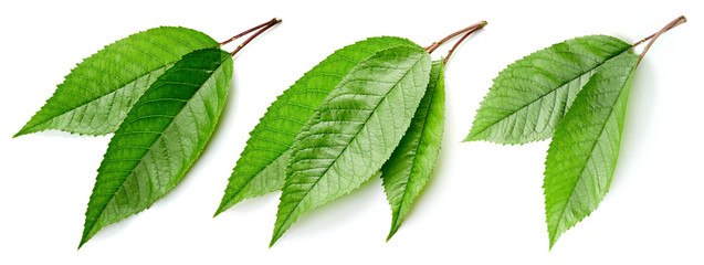 Green Cherry leaf isolated