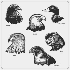 Set of birds. Raven, eagle, owl, falcon, hawk and duck.