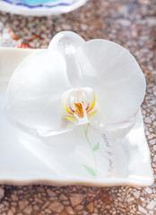 Blooming white orchid in saucer