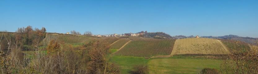 Fototapeta The hills in Monta D'Alba obraz