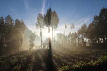 Sonnenspiel zwischen Bäumen am fuße des Bromo Vulkans in Indonesien