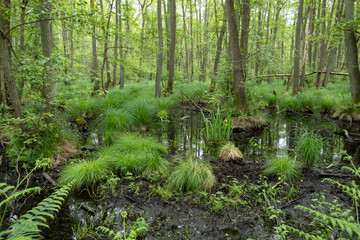 Moorland in the forest on the Baltic Sea