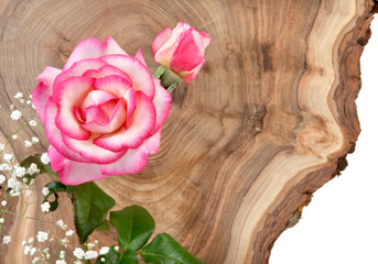 Decorative flower on fresh cut tree trunk. Decorative background for festive occasion