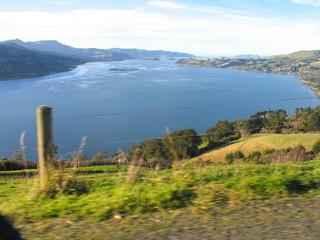 New Zealand. Nature in Taiaroa.