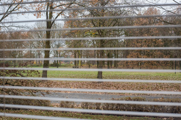 View through window blinds, green park in the winter