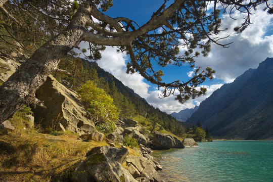 View of a bank of a mountain lake Lac de Gaube framed by pine branches, Pyrenees Occidentales, France