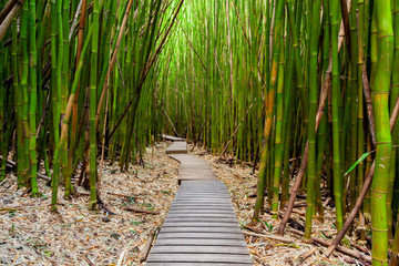 Tuinposter Bamboe Trail through the Bamboo Forest on Maui, Hawaii